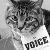 Profile for The Voice of Van Buren County