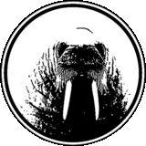 The Walrus BH