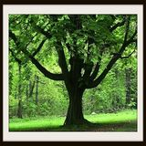 Tree Service Indianapolis
