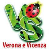 Profile for vs.verona.vicenza