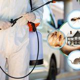 رش مبيدات - شركة رش مبيدات بالرياض